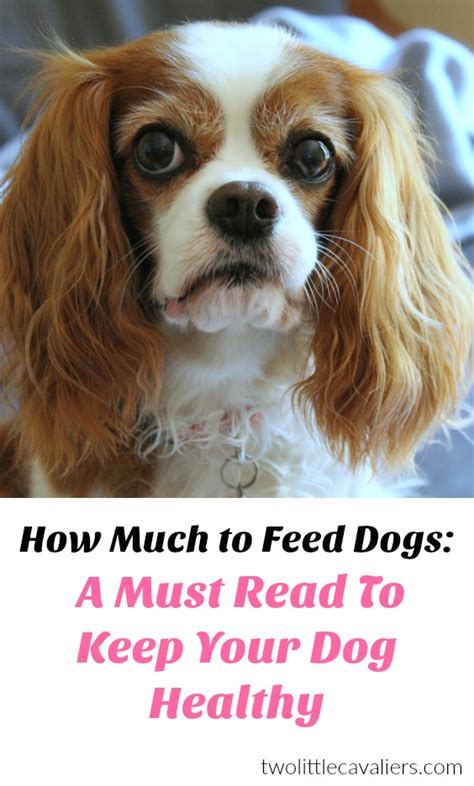 how much to feed a puppy calculator how much to feed dogs a must read to keep your healthy two cavaliers
