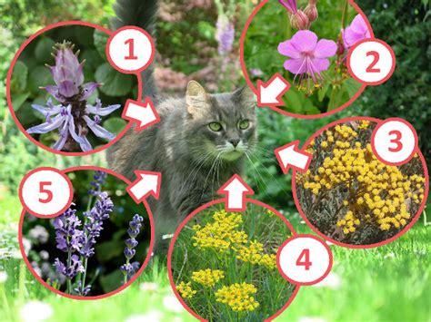 gegen katzenkot im garten 2720 pflanzen gegen katzen im garten