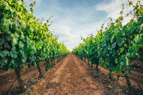wedding venue australia 10 best winery wedding venues in australia