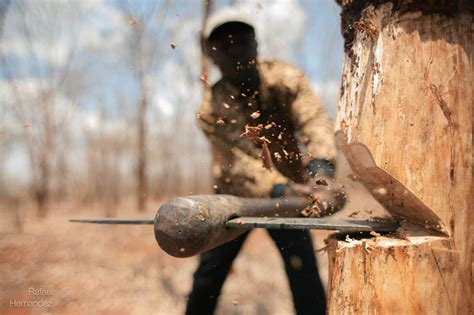 picture of the day when axe meets wood 171 twistedsifter