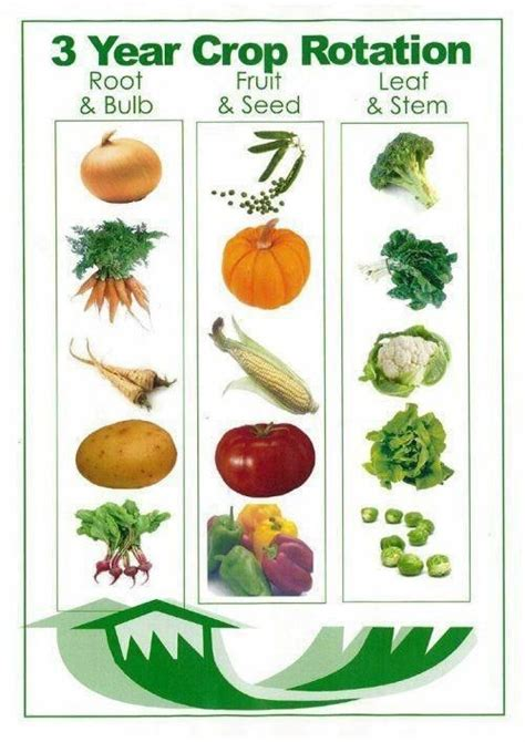 list of edible root shallow root vegetables list search garden root vegetables roots and