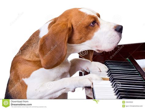 Piano Floor Plan by Dog Playing The Piano Stock Photography Image 23043022