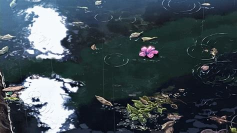 gif anime flowers nature calm relaxing pond drop