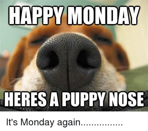 Happy Monday Memes - happy monday heresa puppy nose quick meme com it s monday
