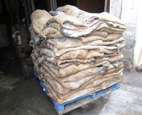Cowhide Suppliers - salted cow hides from cow hide suppliers hungary