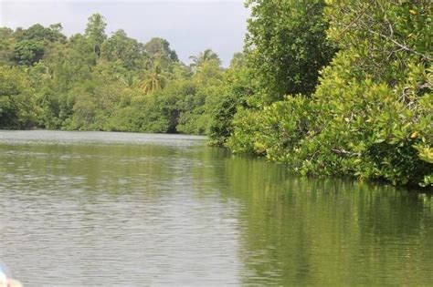 madu ganga boat safari price madu river balapitiya sri lanka address phone number