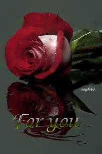 lmagenes de corazones en agua con rosas y aves hermosas im 225 genes de rosas reflejadas en el agua