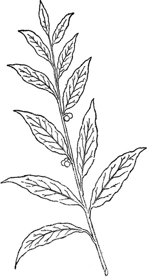 Pretty Berry Branch Line Art! - The Graphics Fairy