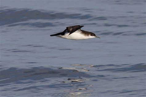 pelagic birdwatching wildlife boat 6hr trips