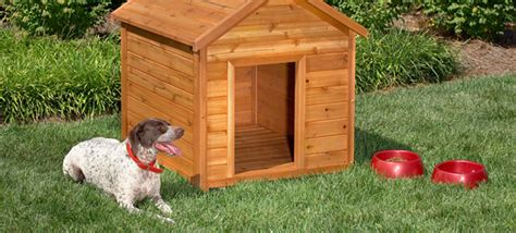 cute little house dogs 10 creative dog house design ideas