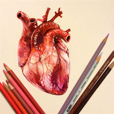 colored drawings best 20 colored pencil drawings ideas on