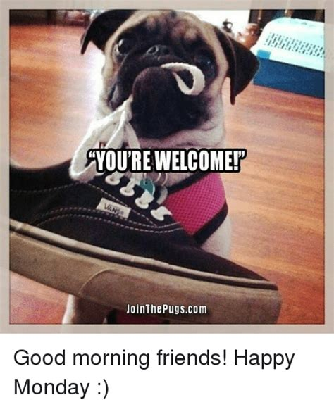 monday pug you re welcome jointhe pugs morning friends happy monday friends meme on