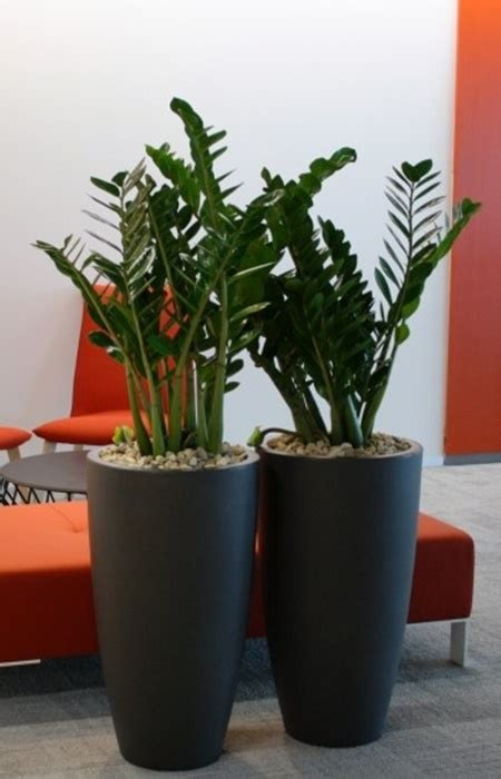 live indoor plants live indoor plant rental maintenance service supplier