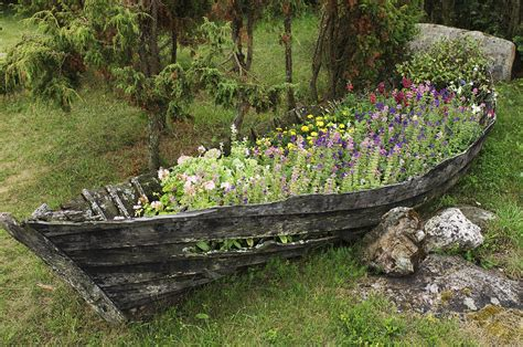 old boat flower bed a old wooden boat used as a flower print by keenpress