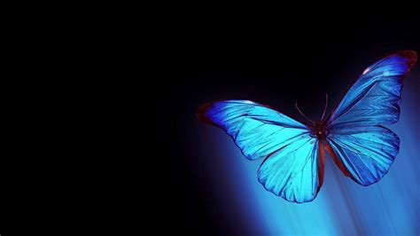 wallpaper butterfly abstract abstract butterfly wallpapers for laptop unique hd