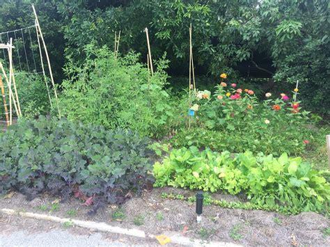 Florida Vegetable Gardening by Florida Vegetable Garden Update Miss Smarty Plants