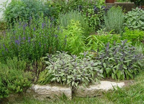 herb garden plants 10 best images about simple herb gardening on pinterest