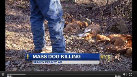 Find In Arkansas Arkansas Mass Killing 57 Dogs Found Murdered In Arkansas Forest Dogtime