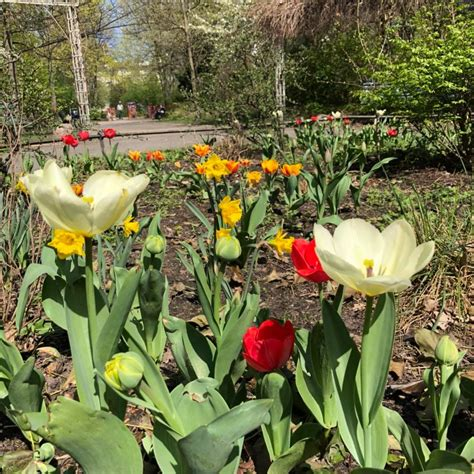 botanischer garten pankow herbstfest 2018 unionpark moabit gardening home