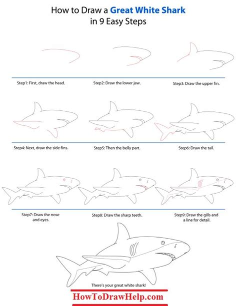 how to draw a doodle shark 17 best ideas about shark drawing on whale