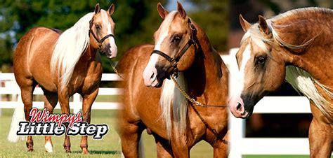 genial caballos cuarto de milla en venta en espa 241 a fotos