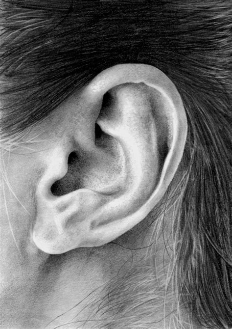 Drawing Ears by Ear Study By Bannanapower On Deviantart