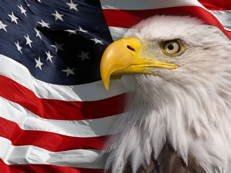 american flag  bald eagle symbol  america picture hd