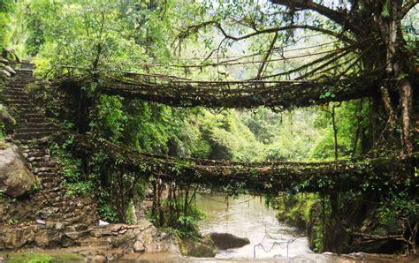 living bridges 15 destinations that capture diverse charm of india