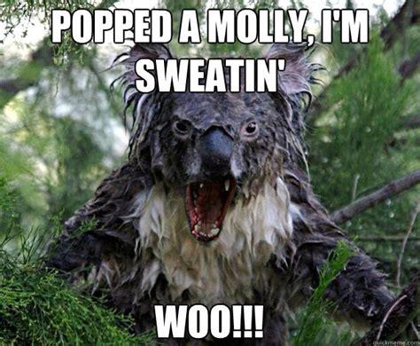 Wet Meme - wet koala bear memes