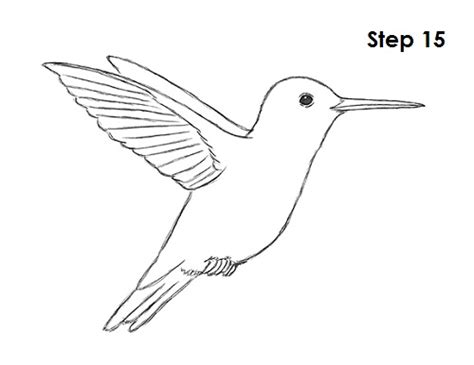 how to draw hummingbirds step 8 male models picture