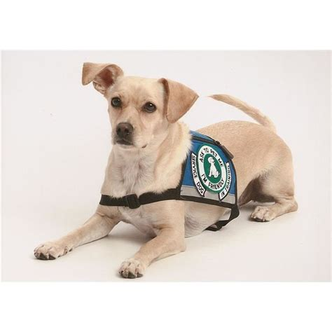 autistic puppy how service dogs can protect autistic children and improve their quality of
