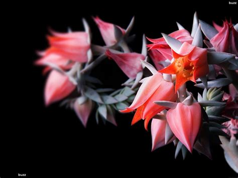 dark wallpaper with flowers exotic flower wallpapers wallpaper cave
