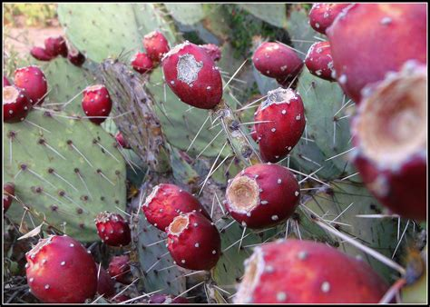 cholla cactus scott s place images and words