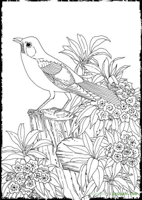 cute advanced coloring pages advanced coloring pages for adults bird cute colouring
