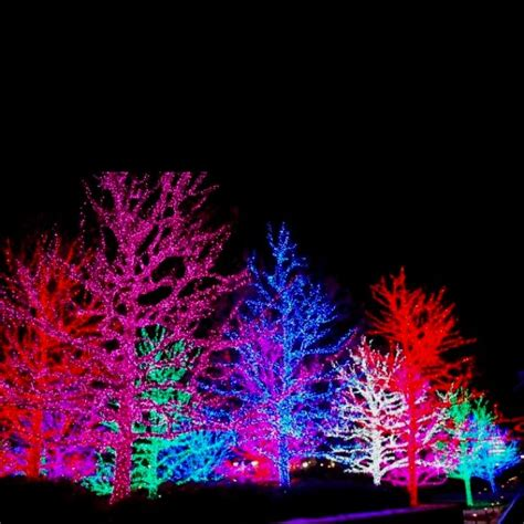 beautiful christmas lights simply beautiful pinterest