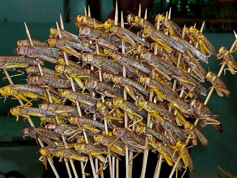 Would You Eat This Grasshopper Snack by International Food 尋找風の終點