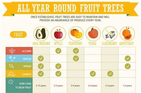 fruit 1 year infographic grow fruit 365 days a year recoil offgrid