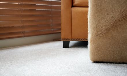 groupon upholstery cleaning carpet cleaning zeus steamers groupon