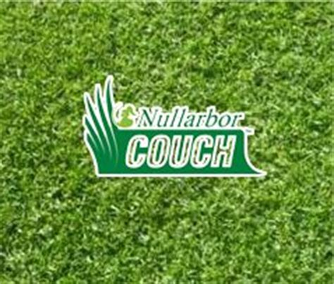 couch turf sydney lawn solutions australia sir walter buffalo turf