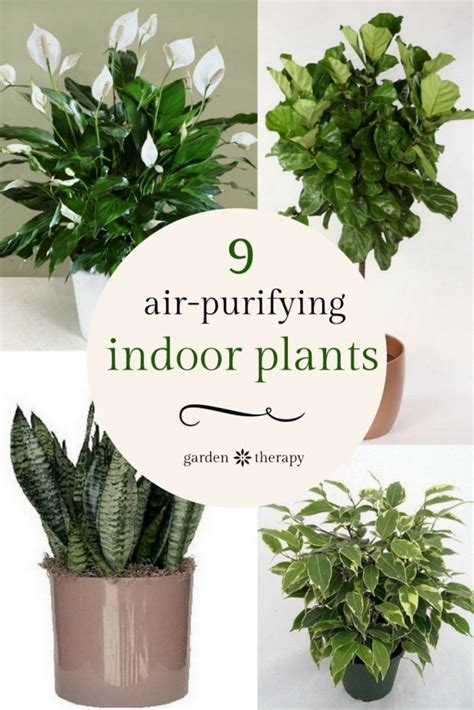 liven   home  indoor vertical wall planters
