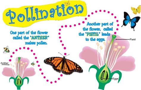 pollination diagram pollination and fertilization facts for kidseasy science