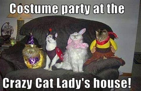 Funny Cat Lady Memes - party cat humor