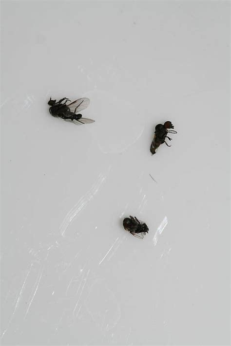 bathroom flies bite bathroom flies bite 28 images thames water to take to end colnbrook s swarms of