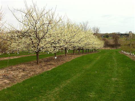minnesota fruit trees fruits for minnesota gardens