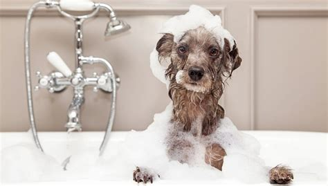 how to groom a how to choose grooming products top tips