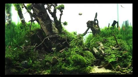 forest aquascape superwen s 2012 aquascape mononoke forest youtube