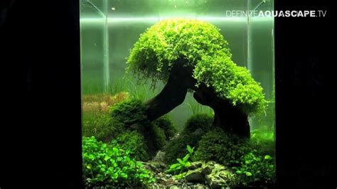 How To Aquascape A Planted Tank by Aquascaping The Of The Planted Aquarium 2012 Nano