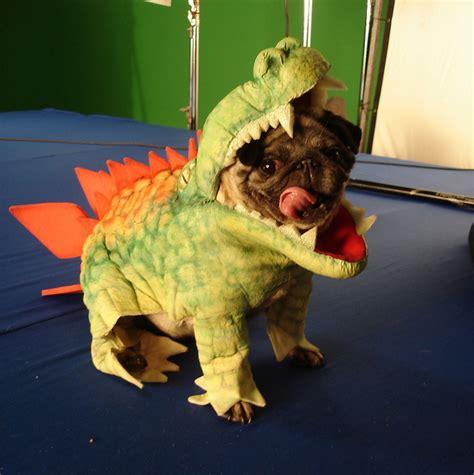 pug dinosaur costume scary dinosaur pug pugs