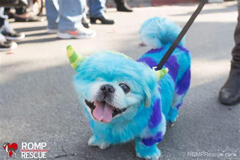 paint puppy pet paint costumes romp italian greyhound rescue chicagoromp italian