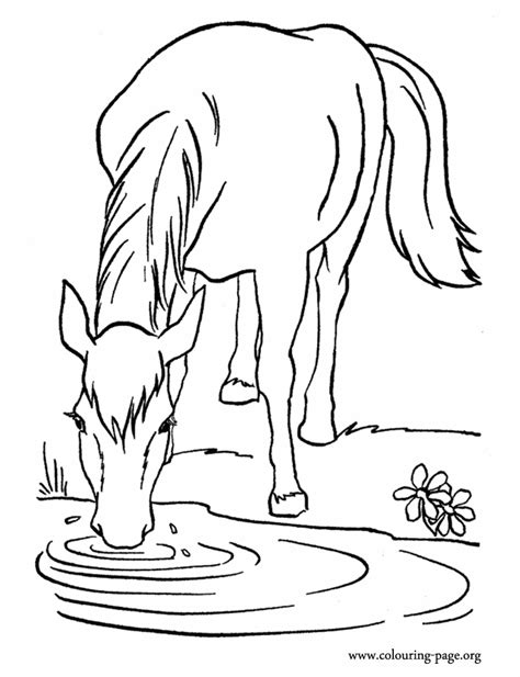 farm horse drinking water   lake coloring page